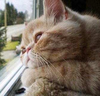 10 Cara Mengobati Penyakit Kulit pada Kucing Anggora