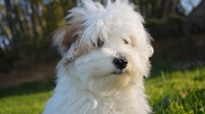 13 Cara Membuat Anjing Betina Birahi