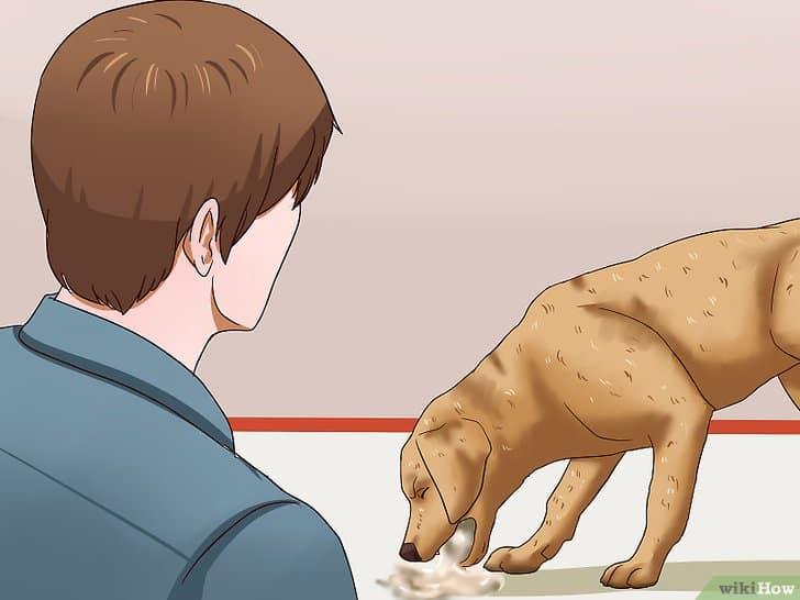 13 Cara Mengobati Anjing Cacingan