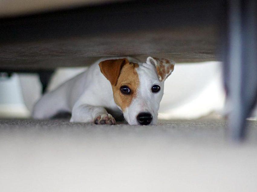 10 Cara Mengatasi Anjing Epilepsi dengan Tepat