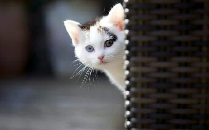 10 Cara Menjinakkan Kucing Penakut