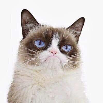 13 Cara Menghilangkan Stres pada Kucing Anggora