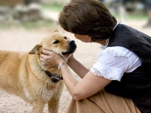 10 Cara Untuk Menggemukan Anjing