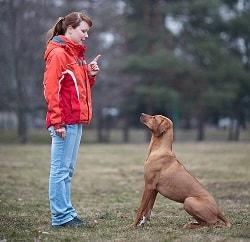 13 Cara Membuat Anjing Tidak Agresif