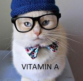 10 Manfaat Vitamin A untuk Kucing