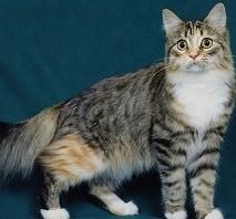 10 Cara Merawat Kucing Campuran