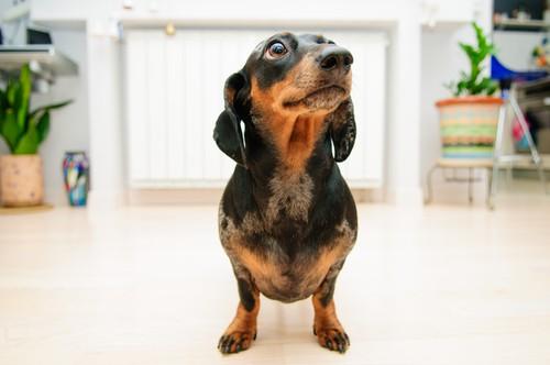 15 Cara Memelihara Anjing di Apartemen