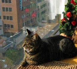13 Cara Memelihara Kucing di Apartemen