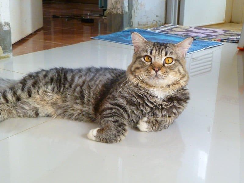13 Tips Agar Kucing Betah di Rumah