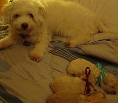 13 Cara Merawat Anjing Pasca Melahirkan