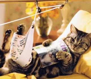 13 Cara Merawat Kucing yang Patah Kaki