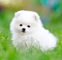 13 Cara Merawat Anjing Agar Tidak Bau