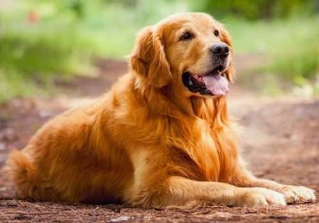 8 Cara Mengatasi Asam Lambung Pada Anjing