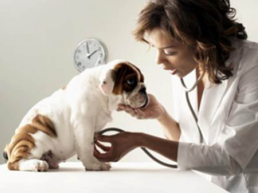 7 Cara Mengatasi Hidung Tersumbat Pada Anjing