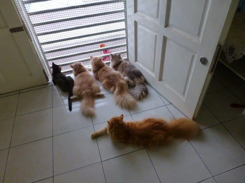 8 Manfaat Memelihara Kucing Dalam Rumah
