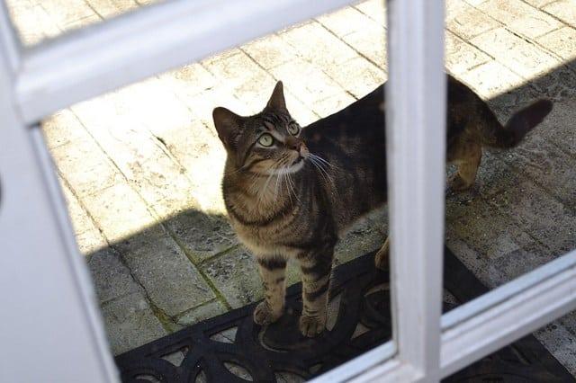 15 Tips Kucing Tidak Keluar Rumah