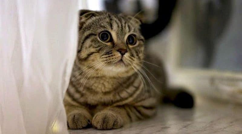 8 Cara Mengatasi Nafas Cepat Pada Kucing Arenahewan Com