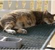 15 Tips Merawat Kucing yang Sedang Hamil