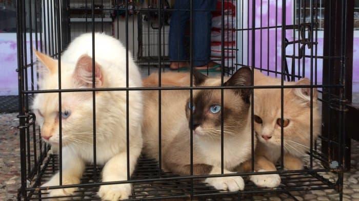 7 Tips Membeli Kucing Di Pet Shop Untuk Pemula