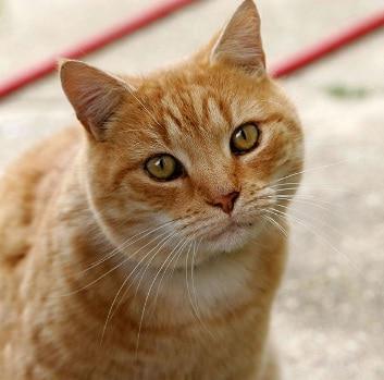 3 Proses Pertumbuhan dan Perkembangan Pada Kucing