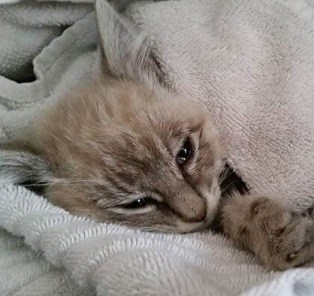12 Tanda Anemia pada Kucing