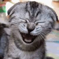 13 Cara Membuat Kucing Senang