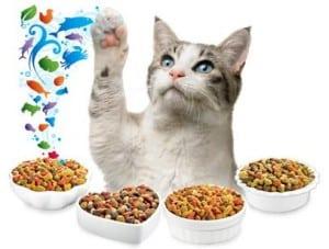 10 Cara Membuat Kucing Makan Makanan Kering
