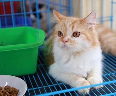 12 Cara Membuat Kucing Nyaman di Kandang