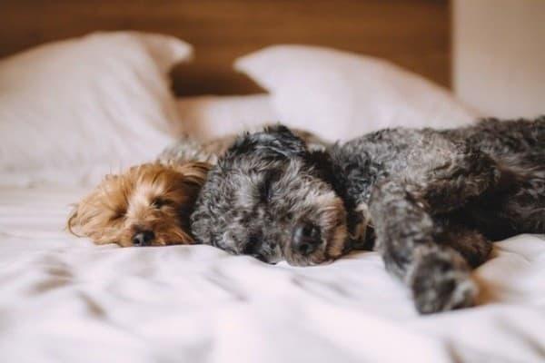 7 Cara Melatih Anjing Umur 6 Bulan