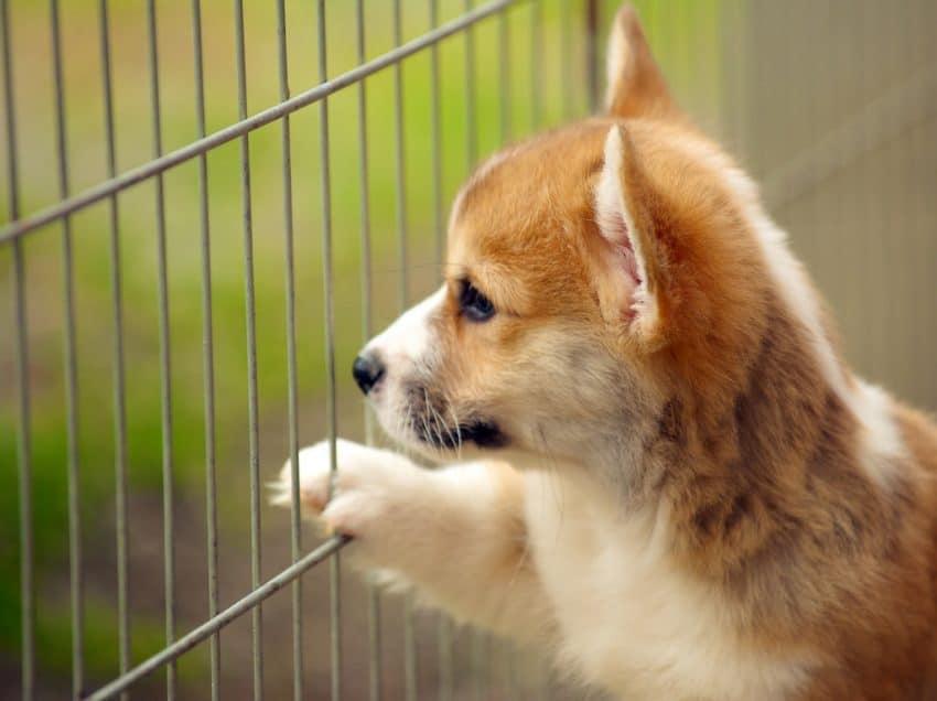 8 Cara Mengobati Anjing Yang Terkena Virus Parvo