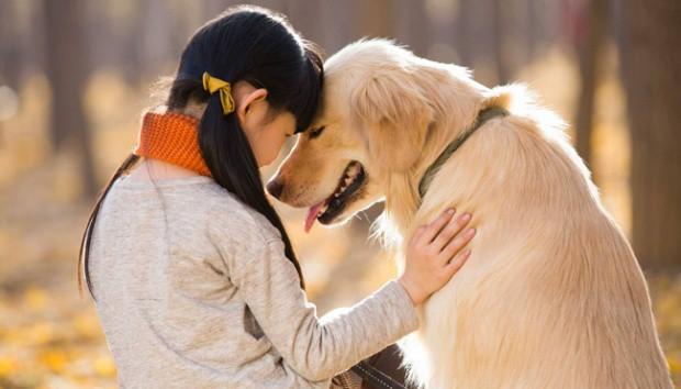 7 Cara Anjing Mengenali Majikannya