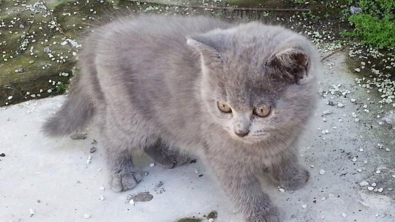 8 Cara Untuk Mengetahui Umur Kucing Arenahewan Com