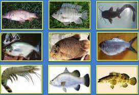 13 Ternak Ikan yang Paling Menguntungkan