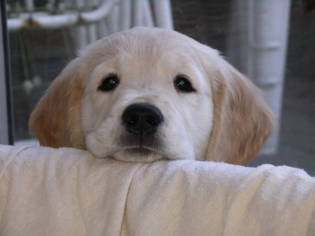 13 Jenis Penyakit Kulit pada Anjing