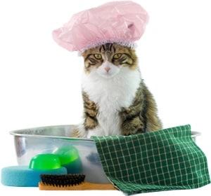 10 Fungsi Grooming pada Kucing