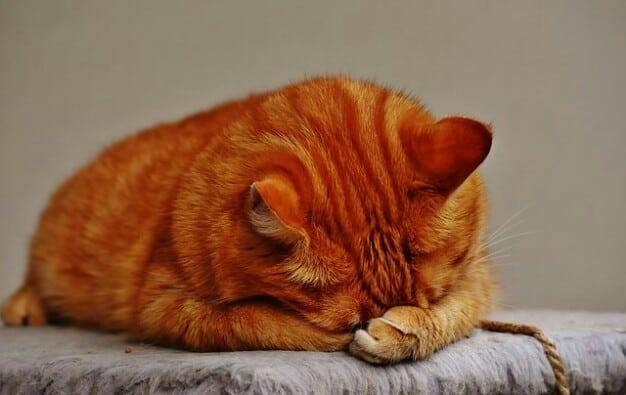 7 Cara Agar Kucing Tidak Kabur Dari Rumah Arenahewan Com