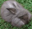 6 Cara Menghilangkan Ketombe Pada Kelinci