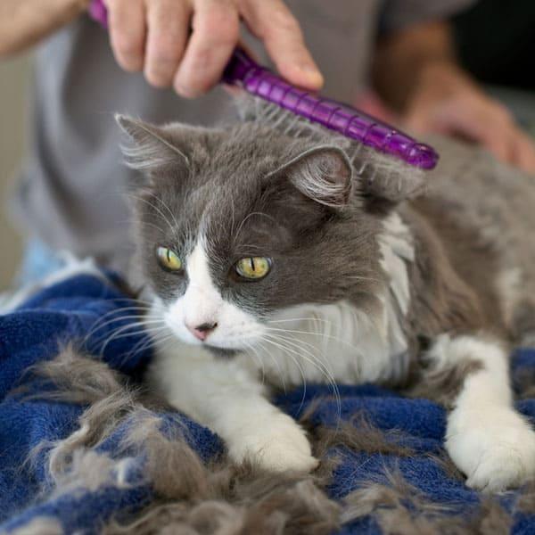 Cara Mengobati Gatal Pada Kucing Anggora
