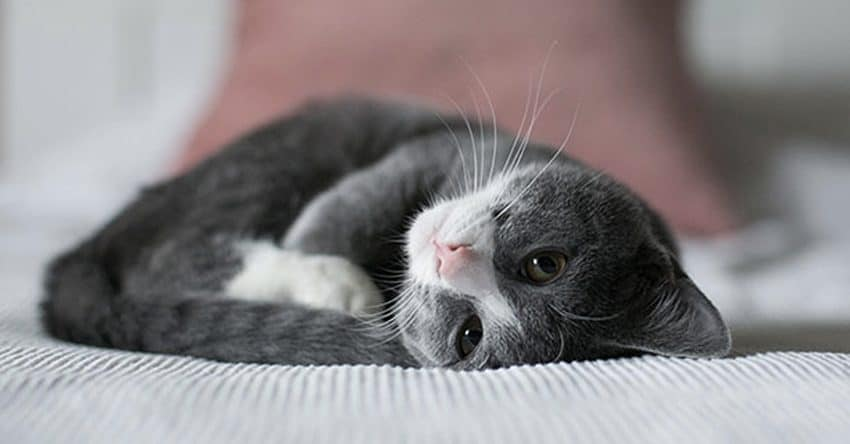 14 Cara Mencari Kucing Yang Hilang