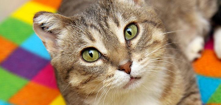 Ciri-ciri Kucing Terkena Virus Wajib Tahu