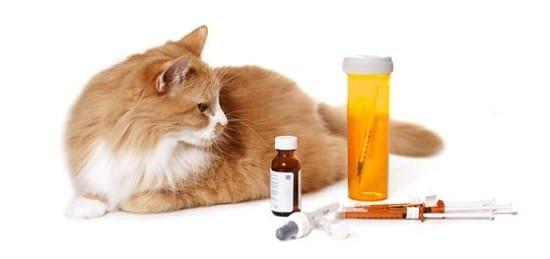 12 Cara Mengobati Kucing Keracunan Racun Tikus