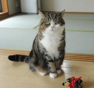 11 Cara Merawat Kucing Lokal Agar Bagus