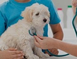 11 Cara Mengobati Infeksi Telinga pada Anjing