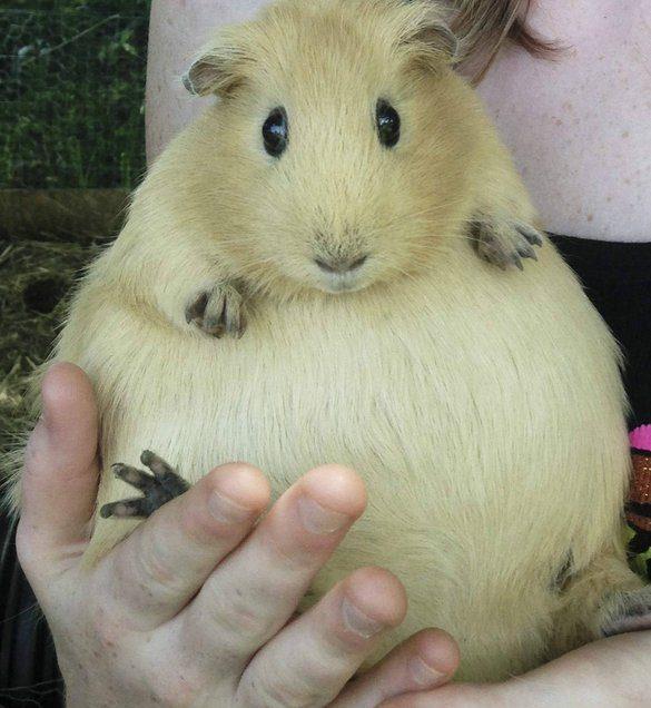 12 Cara Merawat Hamster Hamil