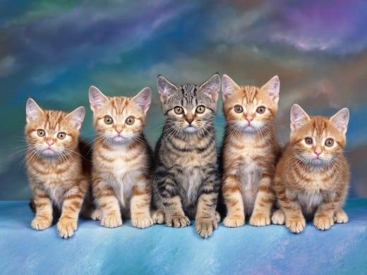 10 Manfaat Kucing dalam Kehidupan Sehari Hari