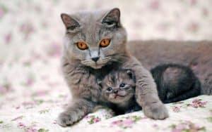 Merawat dan memelihara anak kucing khususnya yang baru lahir 14 Tips Memelihara Anak Kucing