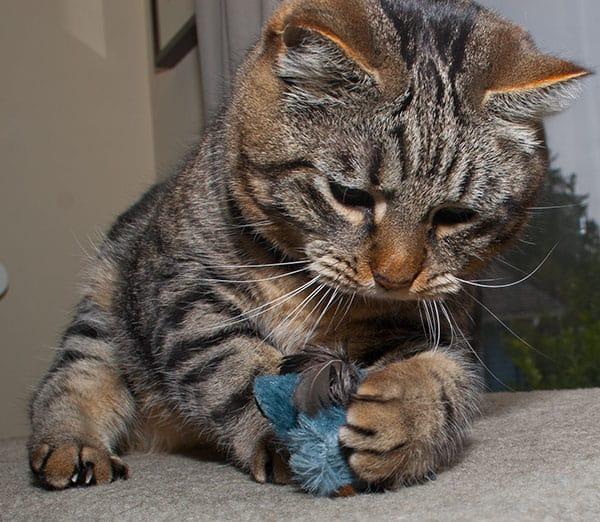 8 Cara Mengobati Burung di Gigit Kucing