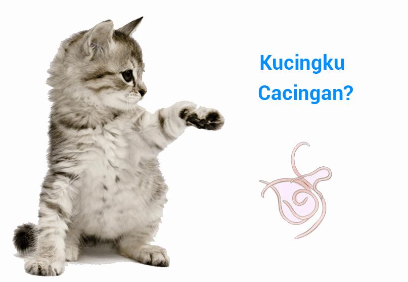 10 Manfaat Obat Cacing pada Kucing