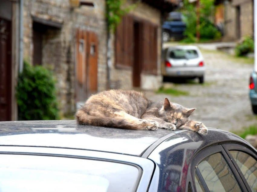 8 Cara Agar Kucing Tidak Naik ke Atas Mobil