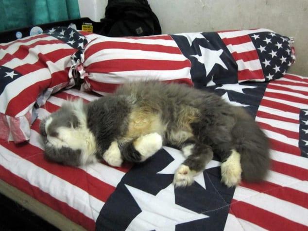 9 Cara Agar Kucing Tidak Naik ke Kasur